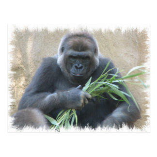 Silverback-Gorilla-Postkarte Postkarte
