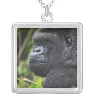 Silverback-Tiefland-Gorilla, Gorilla-Gefangener Versilberte Kette