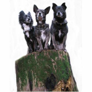 Sind hier die Hunde auf einem Klotz Photo Figuren