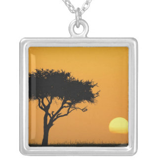 Single-Akazienbaum silhouettiert am Sonnenaufgang, Versilberte Kette