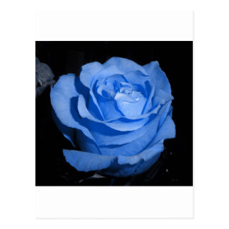 Single-Blau-Rose Postkarte