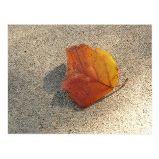 Single-Herbst-Blatt Postkarte