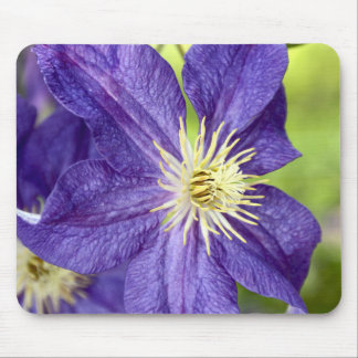 Single lila Clematis-Blume Mousepad