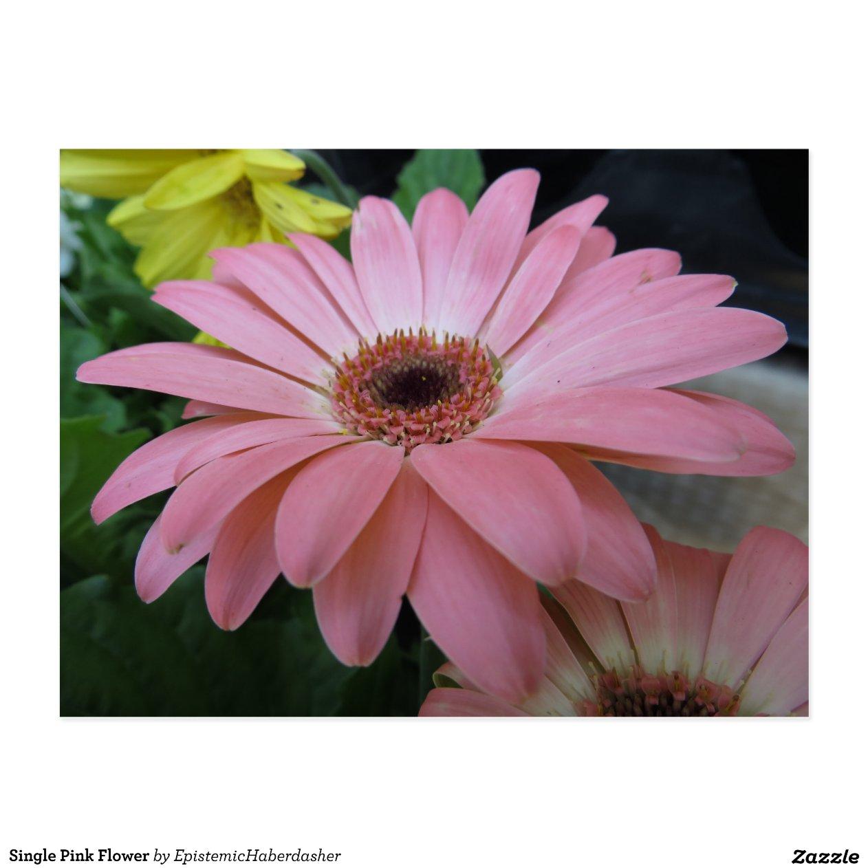 single rosa blume postkarte zazzle. Black Bedroom Furniture Sets. Home Design Ideas