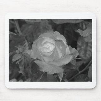 Single-Rosen-Blume mit Wassertröpfchen im Frühling Mousepads