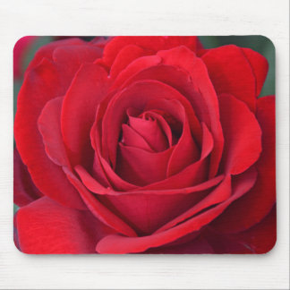 Single-Rote Rose in der vollen Blüte Mousepads