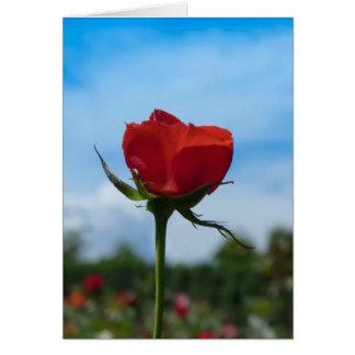 Single-Rote Rose und blauer Himmel Karte