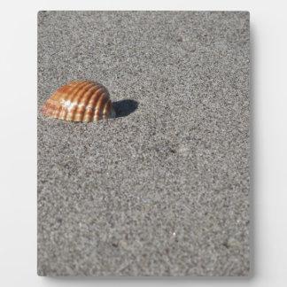Single Seashell auf Sand. Sommerstrandhintergrund Fotoplatte