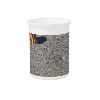 Single Seashell auf Sand. Sommerstrandhintergrund Getränke Pitcher