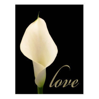 Single weiße Callalilie Postkarte