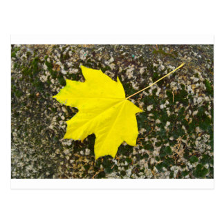 Singleahornblatt gefallen auf die Oberfläche von Postkarte