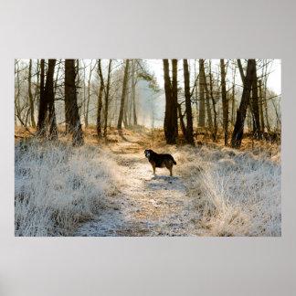 Singlehund wartete voran in den Weg, der durch Poster