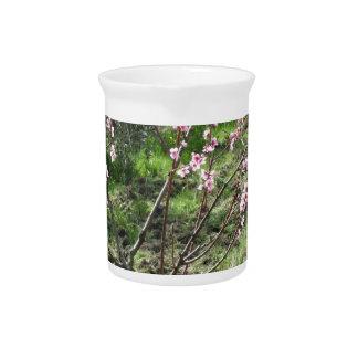 Singlepfirsichbaum in der Blüte. Toskana, Italien Getränke Pitcher