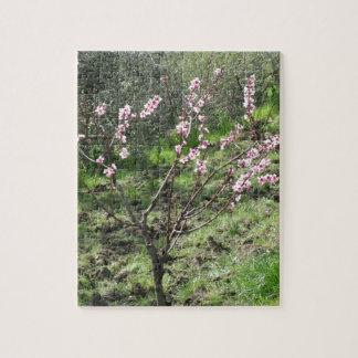Singlepfirsichbaum in der Blüte. Toskana, Italien Puzzle