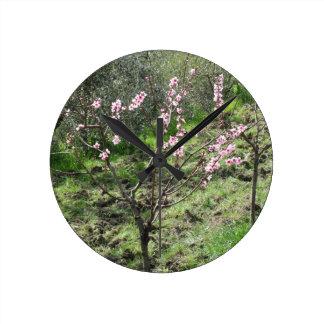 Singlepfirsichbaum in der Blüte. Toskana, Italien Runde Wanduhr