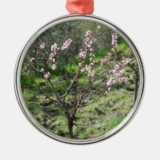 Singlepfirsichbaum in der Blüte. Toskana, Italien Silbernes Ornament