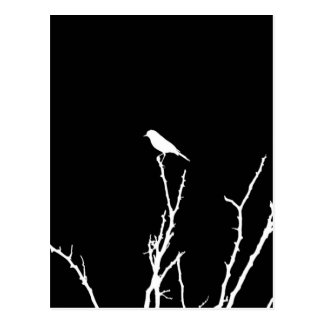 Singvogel-Nacht Postkarte