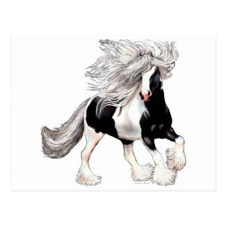 Sinti und Roma-Pferd Casanova Postkarte
