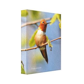 Sitzen hübsch: Männlicher Rufous Kolibri Leinwanddruck