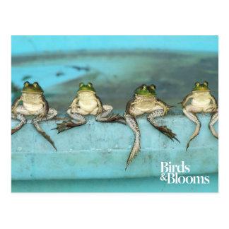 Sitzende Frösche Postkarte
