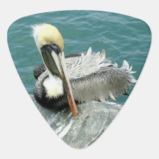 Sitzender Pelikan Plektrum