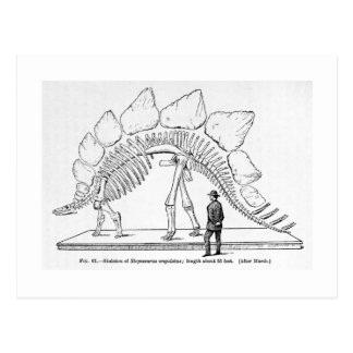 Skeleton Kunstpostkarte des Stegosaurus Postkarte
