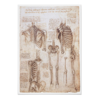 Skeleton Studien, Leonardo da Vinci, 1510 Poster
