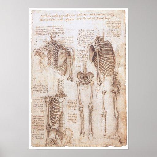Skeleton Studien, Leonardo da Vinci, 1510 Plakat