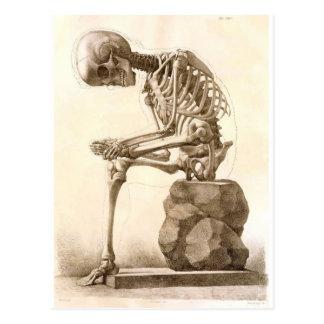 Skelett Postkarten