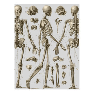 Skelette von der Brockhaus u. Efron Enzyklopädie Postkarte