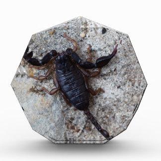Skorpion des Spezies Euscorpius italicus Acryl Auszeichnung