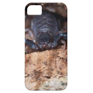 Skorpion des Spezies Euscorpius italicus Barely There iPhone 5 Hülle