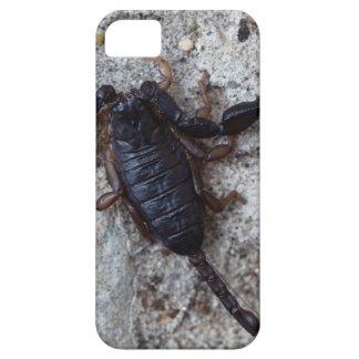 Skorpion des Spezies Euscorpius italicus Etui Fürs iPhone 5