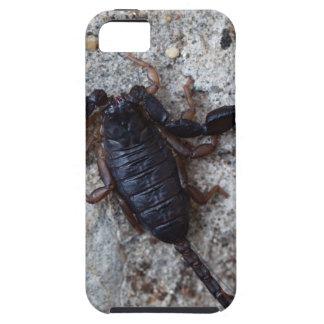 Skorpion des Spezies Euscorpius italicus iPhone 5 Hüllen