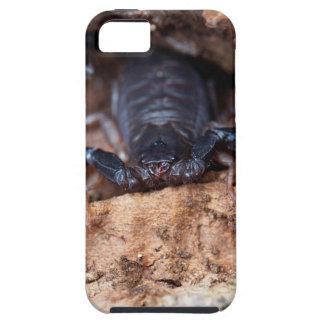 Skorpion des Spezies Euscorpius italicus iPhone 5 Schutzhülle