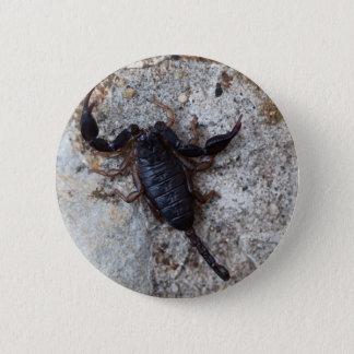 Skorpion des Spezies Euscorpius italicus Runder Button 5,7 Cm