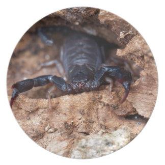 Skorpion des Spezies Euscorpius italicus Teller
