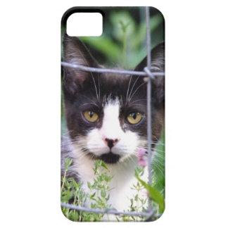 Smokings-Kätzchen Xena im Garten iPhone 5 Fall iPhone 5 Etuis
