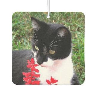 Smokings-Katze und Hauptwaschbär-Doppeltes Lufterfrischer