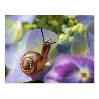 Snail Postkarte