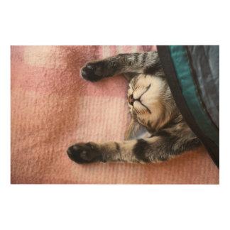 Snoozing Kätzchen Holzwanddeko