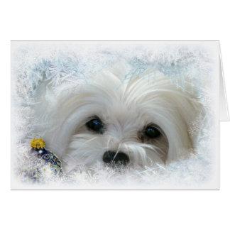 Snowdrop die maltesische Weihnachtskarte Grußkarte