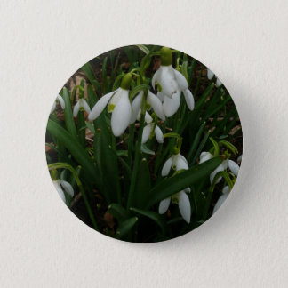 Snowdrops I (Galanthus) weiße Frühlings-Blumen Runder Button 5,1 Cm