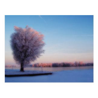 Snowy-Baum-Postkarte Postkarte