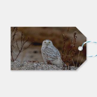 Snowy-Eule, die auf einem Felsen sitzt Geschenkanhänger