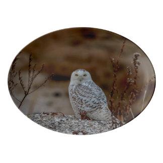 Snowy-Eule, die auf einem Felsen sitzt Porzellan Servierplatte