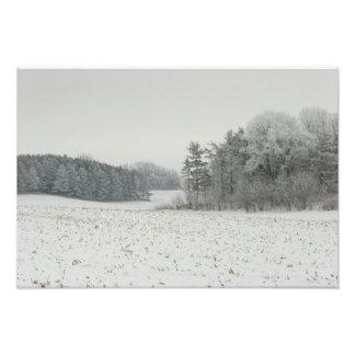 Snowy-Feld und Baum-Druck Fotodruck