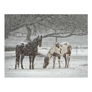 Snowy-Pferde Postkarte