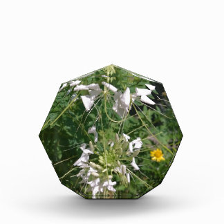 Snowy-Weiß-wilde Blumen durch JanLynn Acryl Auszeichnung