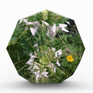 Snowy-Weiß-wilde Blumen durch JanLynn Auszeichnung